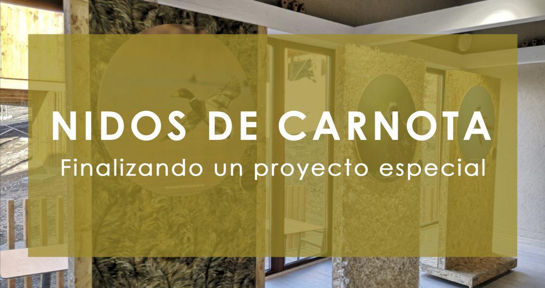 Nidos de Carnota Finalizando el Proyecto